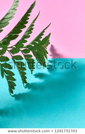 Natürlichen fern Blatt Double Kopie Raum Stock foto © artjazz