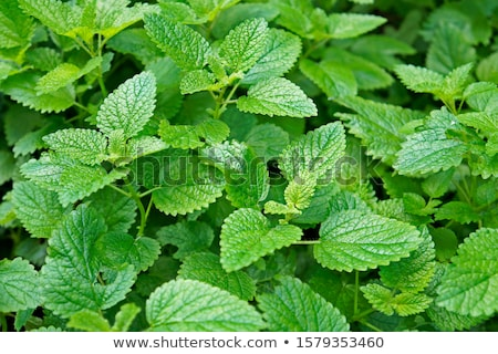 ervas · jardim · ferramentas · primavera · comida - foto stock © simply