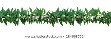 Skunks charakter granicy ilustracja liści tle Zdjęcia stock © bluering