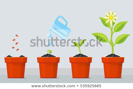 Green Plant Growing in Pot Vector Isolated Icon Stock photo © robuart