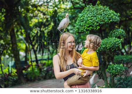 Mother and son feeding ibes in the park. Little Egret Cattle egret Bubulcus ibis Waters Edge. Family Stock photo © galitskaya