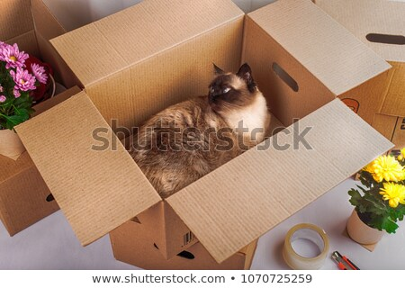 Cute cat in a paper box Stock photo © amaomam