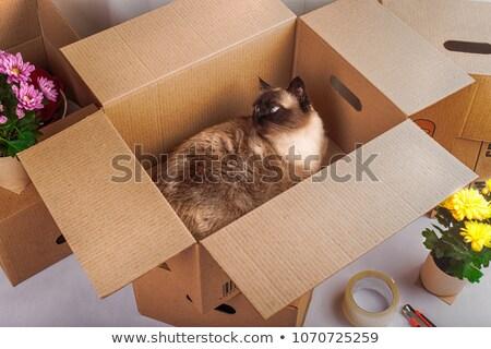 Cute cat in a paper box Stock photo © amaomam