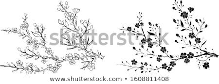 Set of golden sakura flowers Stock photo © blackmoon979