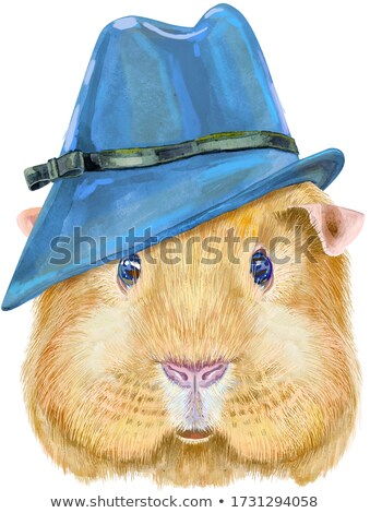 Watercolor portrait of Self guinea pig in blue hat on white background Stock photo © Natalia_1947