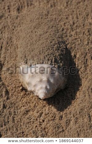 Wind Up Snail Stock photo © mybaitshop
