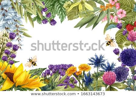 蜂 とげ いい 詳細 ピッキング アップ ストックフォト © X-etra