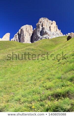 inekler · yüksek · ağaç · çim · dağ - stok fotoğraf © antonio-s