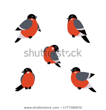 bullfinch Stock photo © perysty