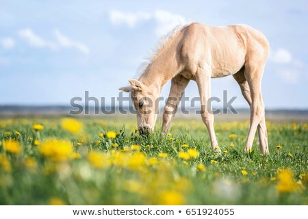 Red horse among dandelions stock photo © SKVORTSOVA