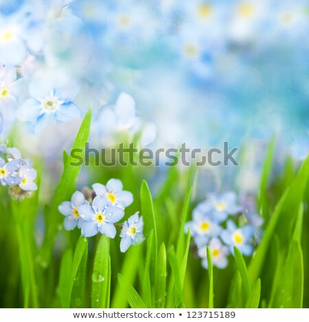 Fantasy Gentle Floral Background Blue Flowers Defocused Photo stock © Taiga