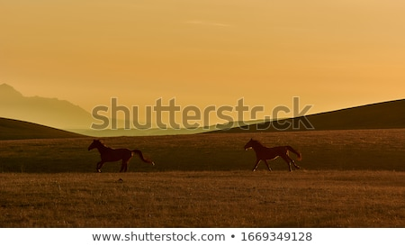Couple spotting an animal in the countryside Stock photo © photography33