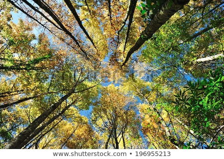 Feuillus arbres vertical vue Photo stock © swatchandsoda