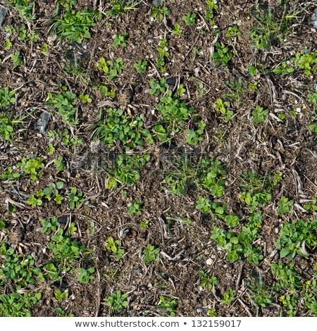 suolo · erba · texture · senza · soluzione · di · continuità · sole · vita - foto d'archivio © tashatuvango