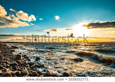鴎 海岸 徒歩 エッジ 無限 プール ストックフォト © silkenphotography