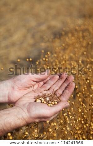Agricultor semillas muestra año cosecha Foto stock © stevemc