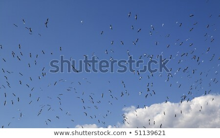 blue sky full of many seagulls birds flying landfill stock photo © lunamarina