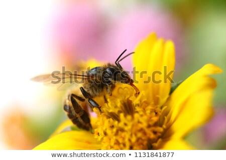 Stock fotó: Méh · virág · kicsi · fehér · virág · almafa · tavasz
