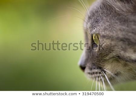 Brillante verde gato blanco jóvenes Foto stock © dnsphotography