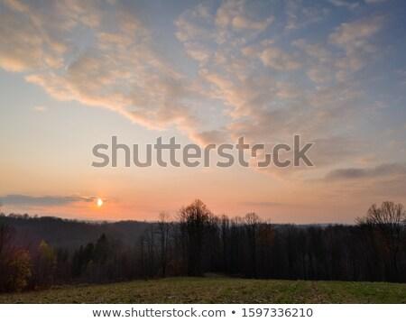 Kukorica maradék mező ősz mezőgazdaság citromsárga Stock fotó © alex_grichenko