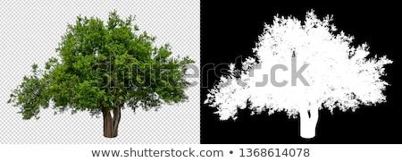 ősz bokor izolált fehér zöld barna Stock fotó © tashatuvango