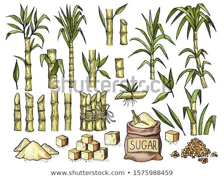 Ripe sugarcane plant Stock photo © smithore