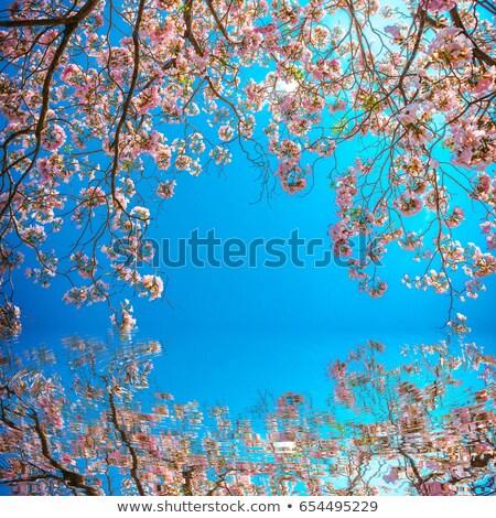 Washington · DC · cseresznyevirág · Washington-emlékmű · tó · virág · rózsaszín - stock fotó © backyardproductions