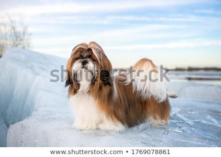 beyaz · hayvan · arkadaş · oturma · evcil · hayvan · atış - stok fotoğraf © eriklam