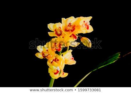 Közelkép narancs orchidea részletek virág rózsaszín Stock fotó © jeancliclac
