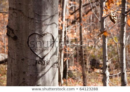 Carved sweetheart tree in the woods Stock photo © njnightsky