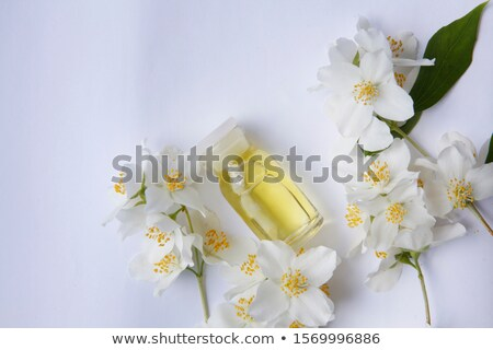 bottle with essence oil and jasmine flower isolated on white Stock photo © tetkoren