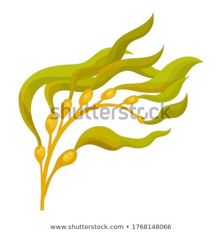 Seaweed on the beach Stock photo © dirkr