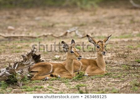 Iki bebek genç ayakta çim alanı birlikte Stok fotoğraf © albertdw