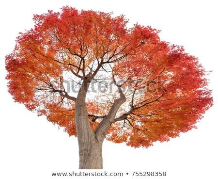 Fantastyczny drzewo biały realistyczny ilustracja silne Zdjęcia stock © artibelka