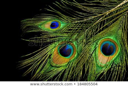 Peacock 3 Stock photo © FOTOYOU