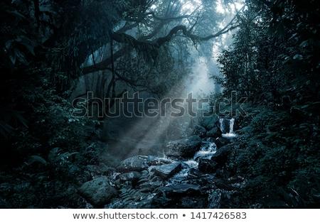 Jungle nacht gestileerde landschap licht maan Stockfoto © tracer