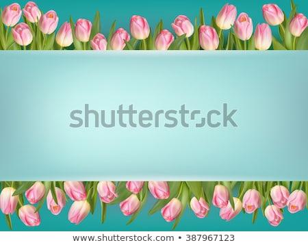 tulip flowers border eps 10 stock photo © beholdereye