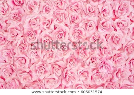 Background with pink roses Stock photo © blackmoon979