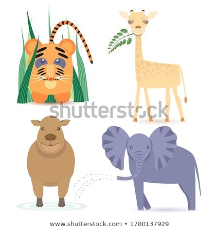 Négy zsiráfok állatkert illusztráció természet háttér Stock fotó © bluering