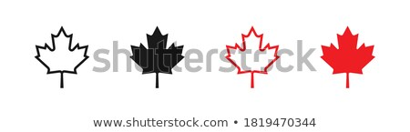 Outlined Canadian Maple Leaf Red Line Cartoon Drawing Stock photo © hittoon