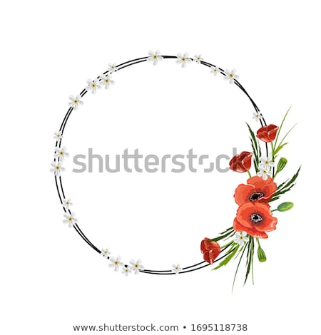 papoula · ilustração · semente · vermelho · preto · silhueta - foto stock © milsiart