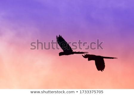 papegaai · vlucht · 3d · render · vogel · tropische - stockfoto © aliencat