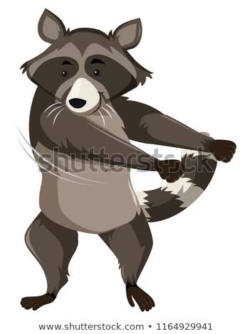 A raccoon doing floss dance Stock photo © bluering