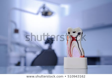 Model dentures in dental office Stock photo © boggy