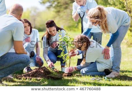 group of volunteers planting trees in park stock photo © dolgachov