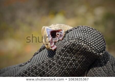 Mordere guanto serpente pericoloso natura Foto d'archivio © taviphoto
