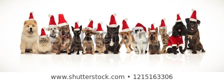 large christmas team of many cute cats and dogs  Stock photo © feedough