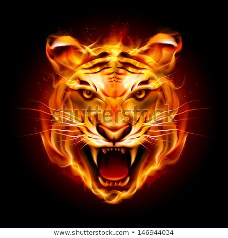 Lángoló tigris fej tűz kabala ikon Stock fotó © patrimonio