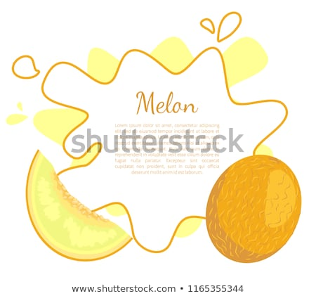 Melon Exotic Juicy Stone Fruit Vector Isolated Stock photo © robuart