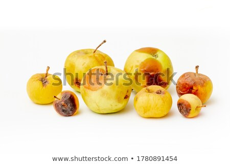 spoiled apple with worm Stock photo © fanfo